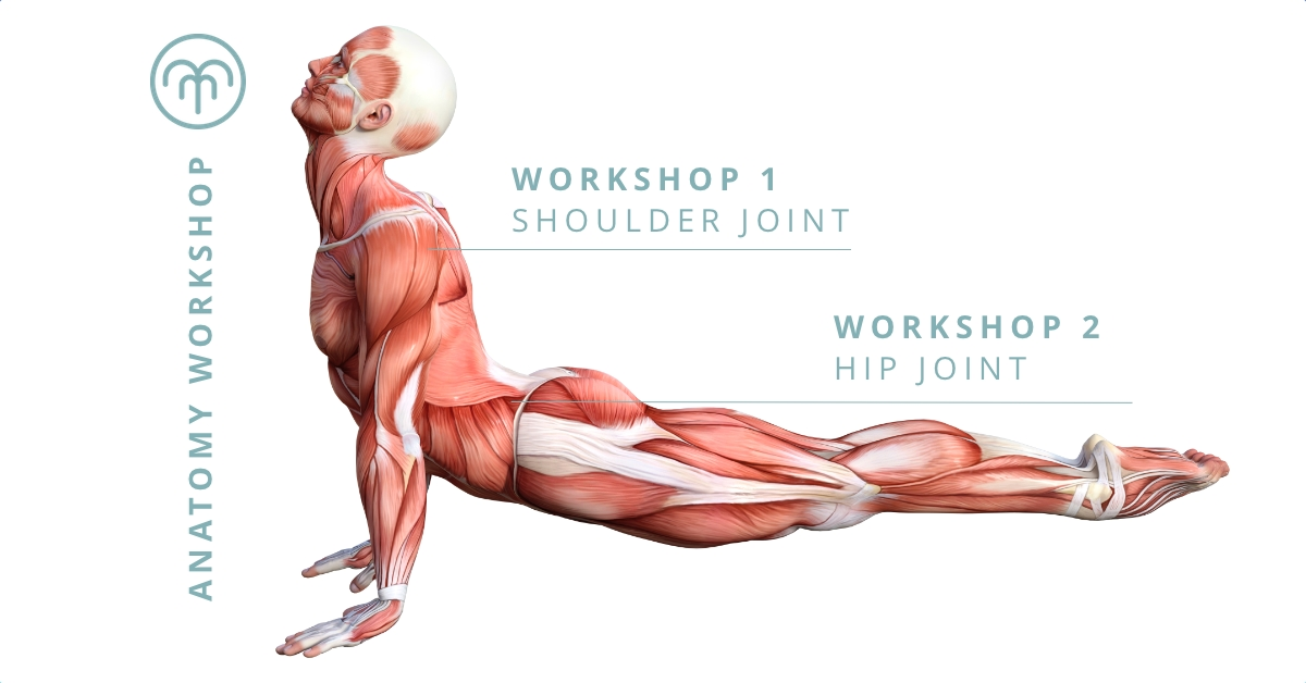 Fundamentals of Anatomy Workshops